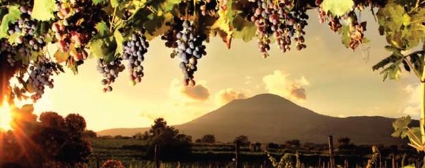 Pompei vineyards